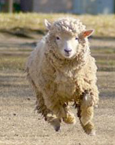 今年は「未年」!関東でも羊に会えるスポットまとめの画像